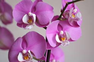 Фотография Крупным планом Орхидеи Фиолетовых цветок