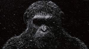 Обои Обезьяны War for the Planet of the Apes Фильмы фото