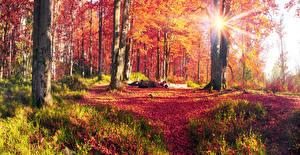 Обои Украина Осенние Пейзаж Карпаты Лучи света Деревья Ствол дерева Листва Трава