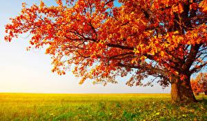 Обои Осень Крупным планом Поля Деревья Ветки Трава Природа фото
