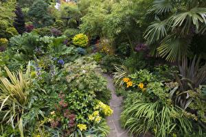 Обои Англия Сады Кусты Тропа Walsall Garden Природа фото