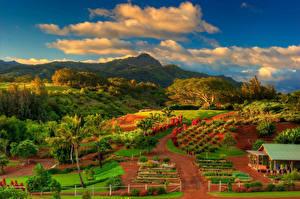 Обои Осень Пейзаж Поля Горы Небо США Гавайи Облака Пальмы Kauai Природа фото