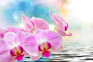 Обои Орхидеи Крупным планом Вода Розовый Цветы фото