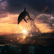 Обои Дельфины Рассветы и закаты Прыжок Брызги Солнце Животные
