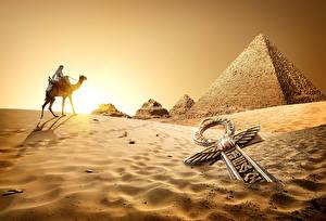 Картинки Египет Пустыни Верблюды Рассветы и закаты Песок Cairo Природа