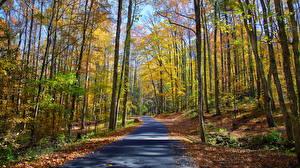 Обои Осень Леса Дороги Деревья Ствол дерева Листья Природа фото