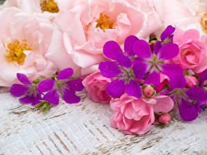 Обои Розы Крупным планом Цветы фото