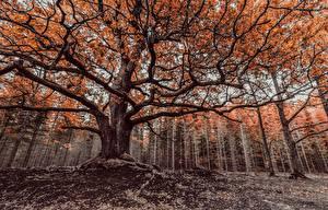 Обои Осень Деревья Ветки Природа фото