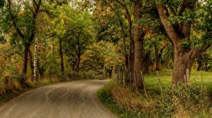 Обои Времена года Осень Парки Дороги Деревья Ствол дерева Природа фото