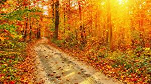 Обои Осень Леса Дороги Листья Природа фото
