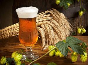 Картинки Напитки Пиво Пшеница Бокалы Колос Пена Листья Еда