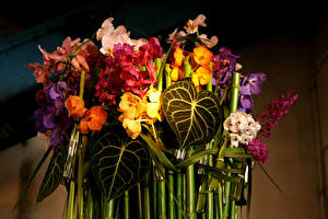 Обои Орхидеи Цветы фото
