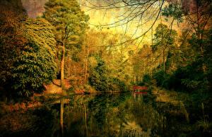 Обои Осень Реки Мосты Леса Деревья Природа фото