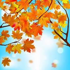 Обои Векторная графика Осень Листья Клён Ветки Природа фото