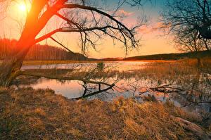 Обои Осень Рассветы и закаты Реки Ствол дерева Ветки Природа фото