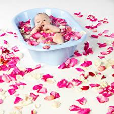 Фотографии Грудной ребёнок Лепестки Ванная Белый фон Ребёнок