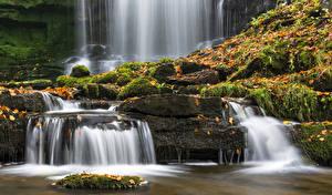 Обои Великобритания Водопады Листья Мох Yorkshire Природа фото