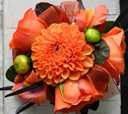 Фотографии Букеты Георгины Розы Бутон Оранжевый Цветы