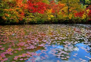 Обои Осень Пруд Листья Природа фото
