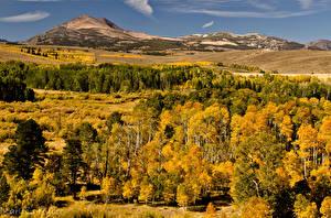 Обои Осень Горы Деревья Природа фото