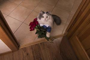 Обои Коты Букеты Розы Взгляд Дверь Животные