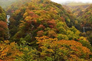 Обои Осень Леса Водопады Природа фото