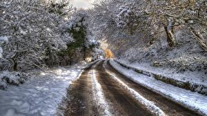 Фотография Зима Дороги Снег Деревья HDR Ветки Природа
