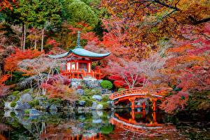 Обои Япония Парки Пагоды Осень Пруд Мосты Киото Деревья Природа фото