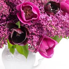 Обои Сирень Тюльпаны Крупным планом Цветы фото