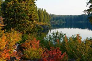 Обои США Озеро Леса Осень Clear Lake Oregon Природа фото