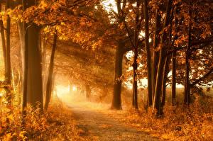 Обои Времена года Осень Деревья Лучи света Природа фото