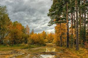 Обои Времена года Осень Леса Деревья Природа фото