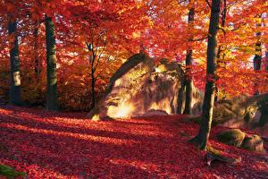Обои Времена года Осень Камни Деревья Листья Ствол дерева Природа фото