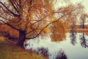 Обои Осень Реки Деревья Ветки Природа фото