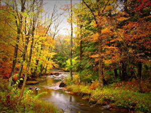 Обои Времена года Осень Леса Реки Деревья Природа фото