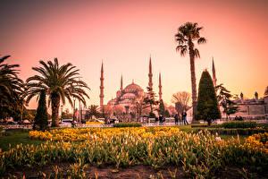 Фото Стамбул Турция Храмы Тюльпаны Султанахмет Мечеть Пальмы