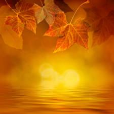 Обои Осень Вода Листья Природа фото