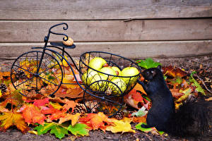 Обои Белки Осень Яблоки Черный Листья Велосипед Животные фото