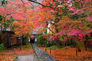 Обои Япония Осень Деревья Листья Природа фото