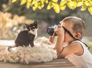 Фотографии Кошки Котята Фотоаппарат Фотограф Дети Животные