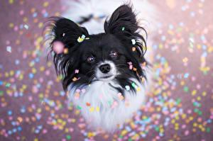 Обои Собаки Взгляд конфетти Животные фото