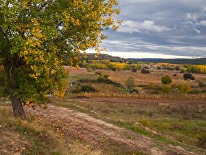 Фото Испания Осенние Поля Небо Дерева Castille la Mancha Природа