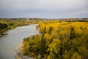 Обои Канада Осень Реки Леса Calgary Природа фото