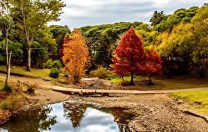 Обои Парки Осень Реки Мосты Деревья Minas Lavalleja Uruguay Природа фото