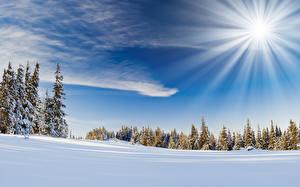 Фотография Небо Зима Солнце Снега Лучи света Природа