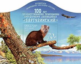 Обои Грызуны Почтовая марка Ветки The 100th Anniversary of the Barguzin Nature Reserve Животные фото