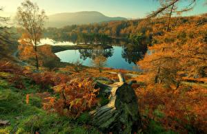 Картинка Англия Осень Реки Пейзаж Деревья Cumbria Природа
