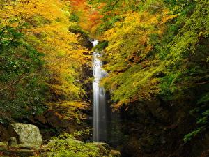 Обои Осень Водопады Скала Ветки Природа фото