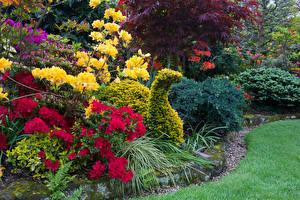 Обои Англия Парки Рододендрон Дизайн Кусты Walsall Garden Природа фото