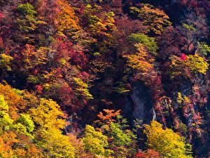 Картинка Осень Деревья Скала Природа